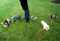 Hunddagis på rastning, Rålambshovsparken.
