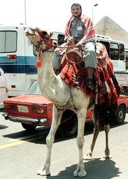 EGYPT-YEMEN-CAMEL