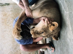 FOR USE WITH STORY BC-BRAZIL-LIONS