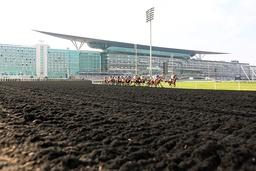 29 03 2014 Dubai UAE VEREINIGTE ARABISCHE EMIRATE Horses and jockeys during the Dubai Kahayla C