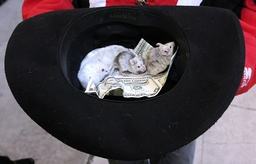 Greg Pike's mice rest in his hat with money donations he received from tourist in Bisbee, Arizona