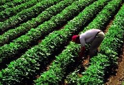 AGRICULTURE, AMERICA - 1982