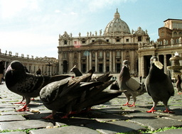PIGEONS FEED IN FRONT OF THE ST PETER'S BASILICA IN ROME