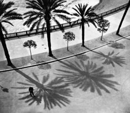 Palms on the 'Quai des Etats Unis' in Nice, 1932
