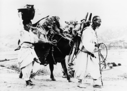 Korea-Krieg 1950 - Returning S.Korean couple / Korean War -