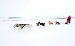 RUSSIA-SLED-DOGS