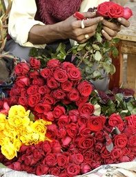 Vendor arranges roses on eve of New Year in Agartala