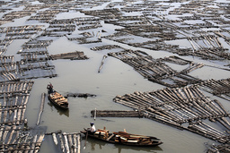 Canoes float amongst rafts of logs on the Lagos Lagoon