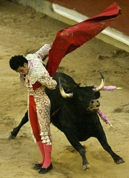 Spanish bullfighter Morenito de Aranda performs a pass to a bull during a bullfight at Canaveralejo bullring in Cali