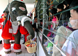 BABY ELEPHANT DRESSED AS SANTA CLAUS PRESENTS GIFTS IN AYUTTHAYA THAILAND