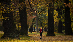 A man joggs in park of Schoenhausen Castle on sunny autumn day in Berlin