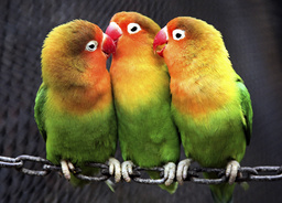 Parrots are seen at a zoo in Nanjing