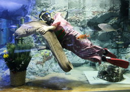 A diver clad in Japanese kimono swims with an eel next to a traditional New Year's decoration at Sunshine International Aquarium in Tokyo
