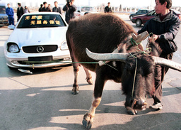 GERMAN LUXURY CAR DRAGGED BY BUFFALO DURING PROTEST IN WUHAN