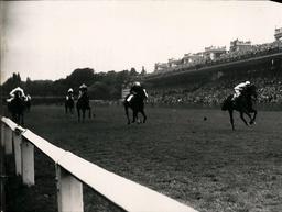 Harness Racing / Horse Racing / Dog Racing / Equestrian