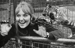 Pop Star Lulu At The Tiger Enclosure At Belle Vue Zoo Manchester. (for Full Caption See Version) Box 670 80103164 A.jpg.