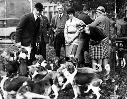 A Group Of Airedale Beagles Are Admired At A Fox Hunting Meet At Ilkley Moor In 1930.
