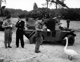 Swan visits British soldiers during manoeuvre