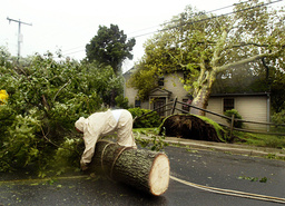 TREE REMOVAL FOLLOWING HURRICANE ISABEL