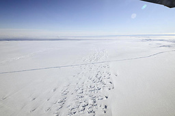 An aerial view of a crack at the Pine Island Glacier ice shelf is seen in western Antarctica