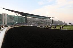 29 03 2014 Dubai UAE VEREINIGTE ARABISCHE EMIRATE Horses and jockeys during the UAE Derby in fr