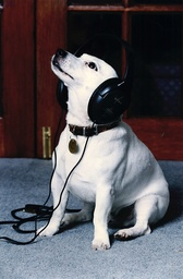 Nipper The Jack Russell Dog; Mascot Of Hmv Record Label/store In 1993.