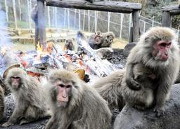 JAPAN-WEATHER-ANIMAL
