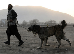 AFGHANISTAN-ANIMALS-DOGS