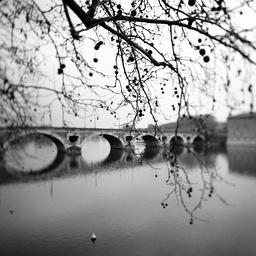 Plane tree and bridge