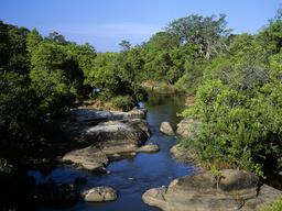 Riverine forest around Olifants River, Kruger National Park, Transvaal, South Africa, September., September.