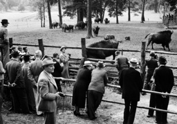Guests visit the bison enclosure in the Schorfheide, 1938